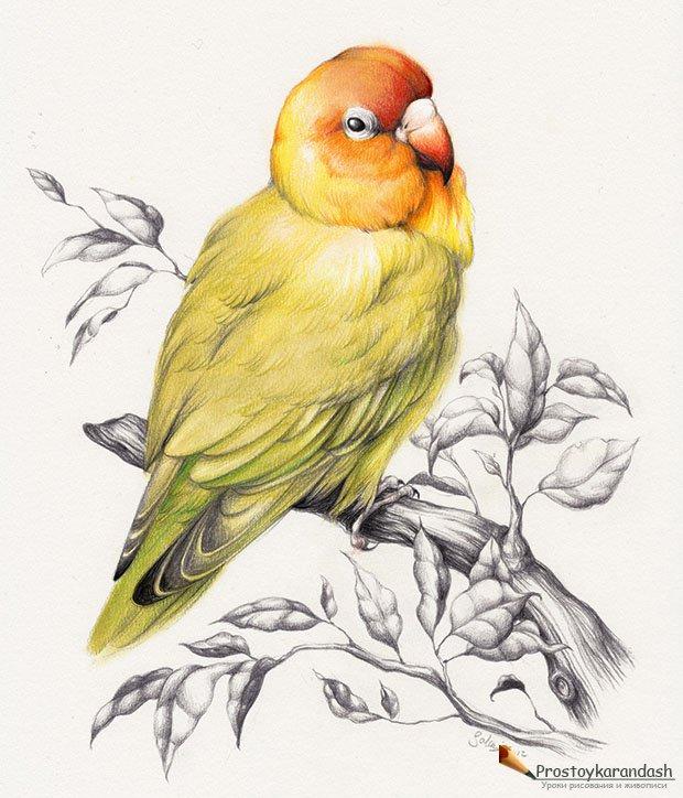 ... , уроки живописи маслом и акварелью: prostoykarandash.ru/main/1092-podborka-dlya-vdohnoveniya-30-ptic.html
