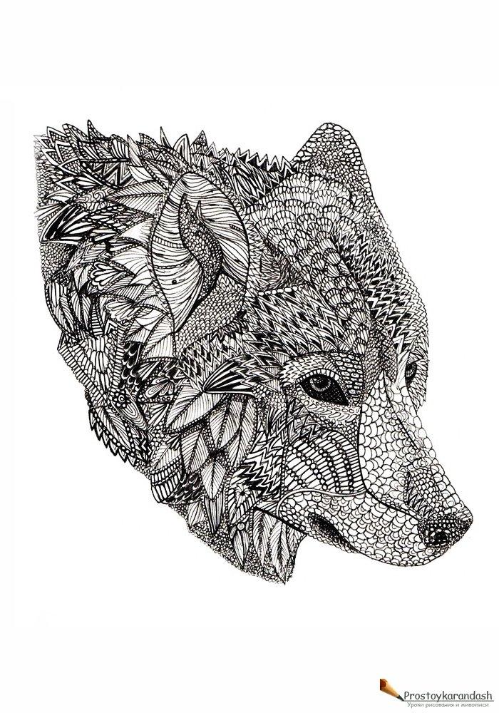 волк раскраски антистресс как рисовать поэтапно уроки