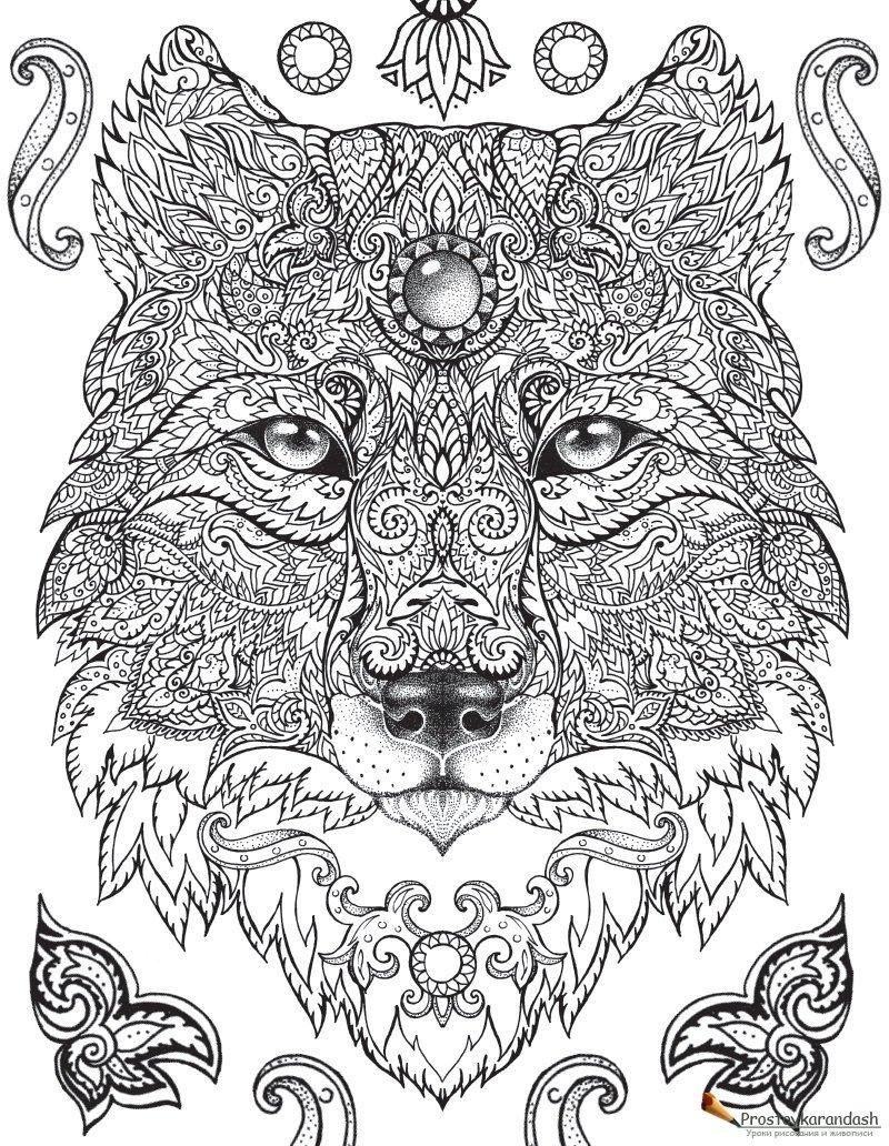 Волк раскраски антистресс » Как рисовать поэтапно. Уроки ...