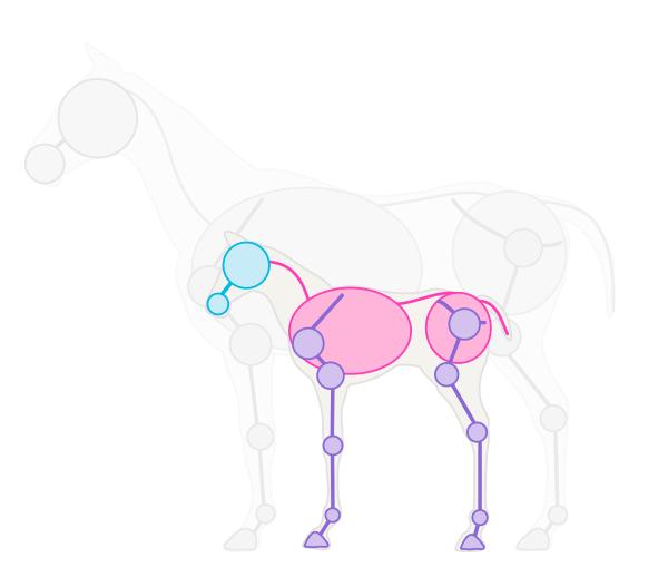 Как нарисовать коней